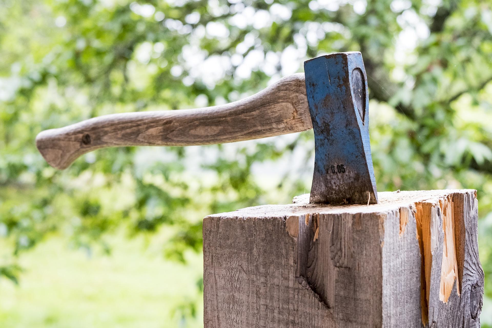 Baumfällung/ Brennholzverkauf